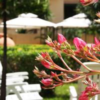 Solemare b&b - Apartments Alghero Our garden