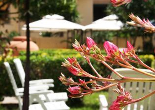 蘇勒瑪麗住宿加早餐酒店- 阿爾蓋羅公寓