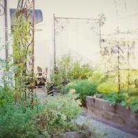 Petit Ermitage Garden