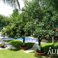 Aurea Hotel and Suites Property Grounds