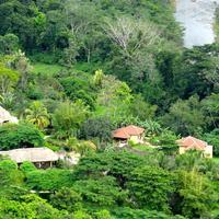 Sleeping Giant Rainforest Lodge Views of Canopy