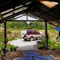 Labang Longhouse Lodge
